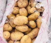 خرید و فروش سیب زمینی