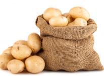 صادرات سیب زمینی ارگانیک