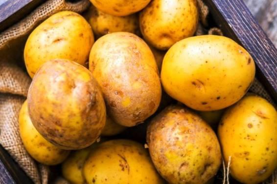 سیب زمینی زنجان