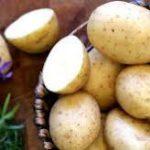 قیمت سیب زمینی اسپریت